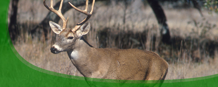 Deer Control and Deer Removal - Jacksonville, & North Florida