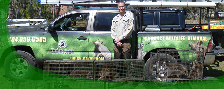 Wildlife Removal Professionals and Animal Removal Company in Jacksonville, Florida