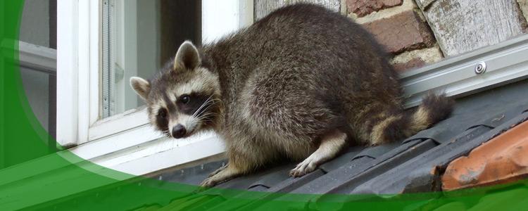 Wildlife Resources, Wild Animal Resources - Jacksonville, FL